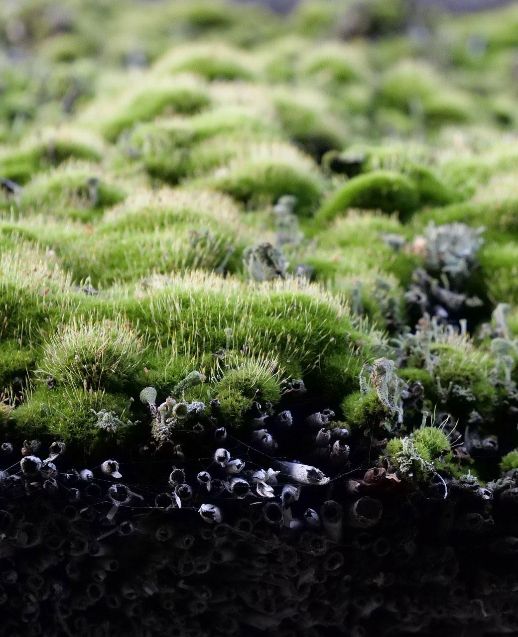 isolation toiture végétalisée