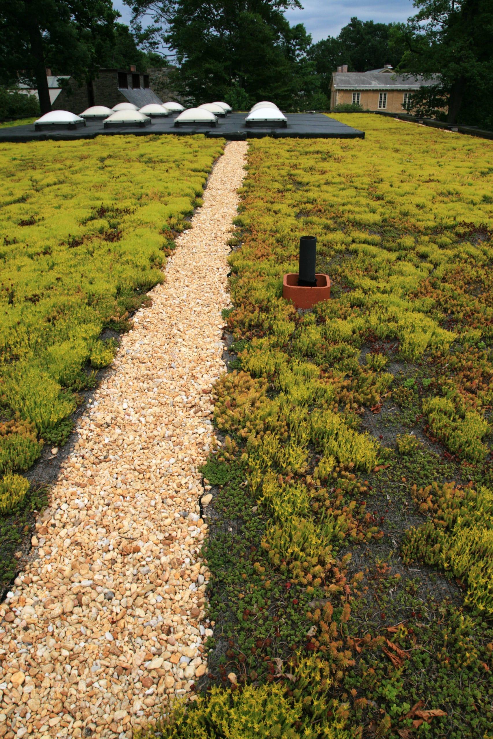 isolation toiture-terrasse vegetalisee polystyrene expanse